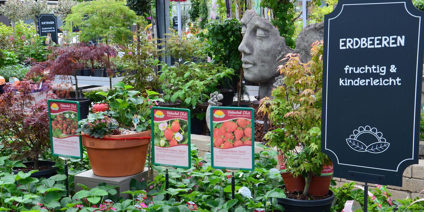 Erdbeeren - fruchtig und kinderleicht
