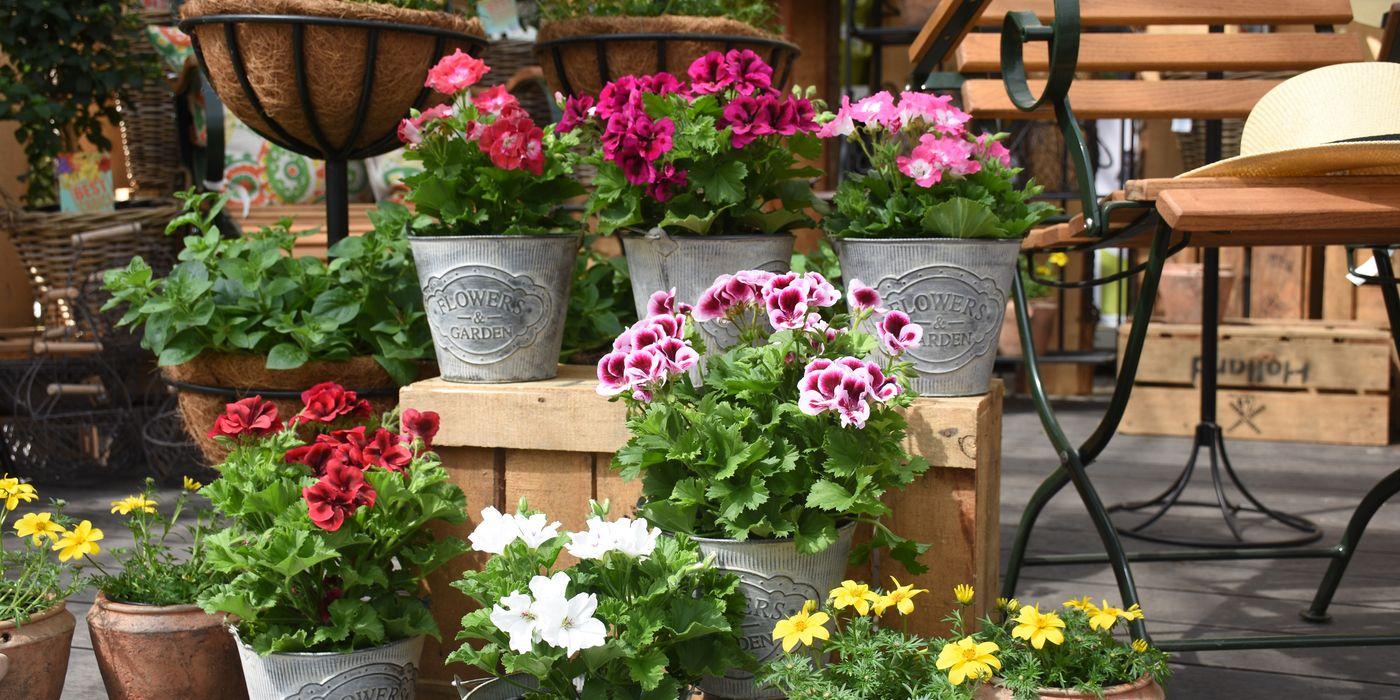Terrassen- und Kübelpflanzen