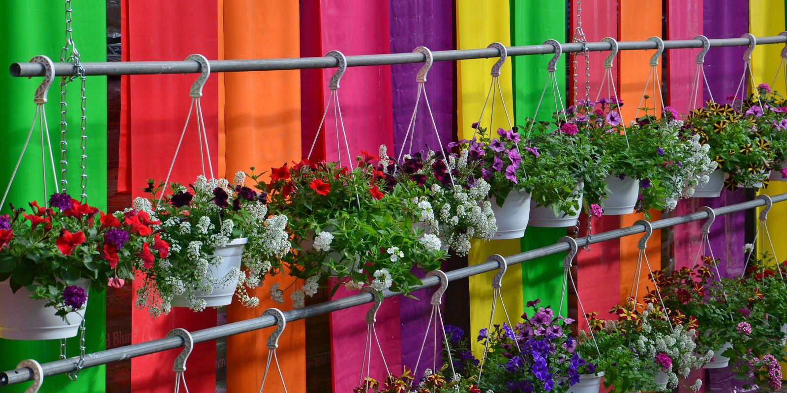 In unseren Blumenhäusern finden Sie für jede Jahreszeit etwas
