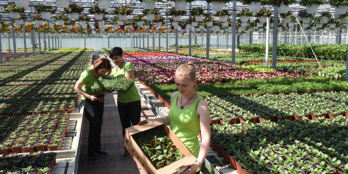Pflanzen aus eigener Produktion