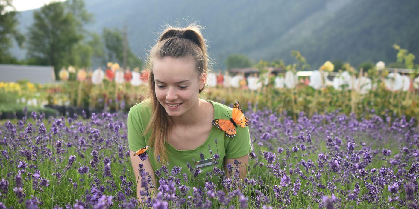 Lavendel - Schmetterlingspflanzen