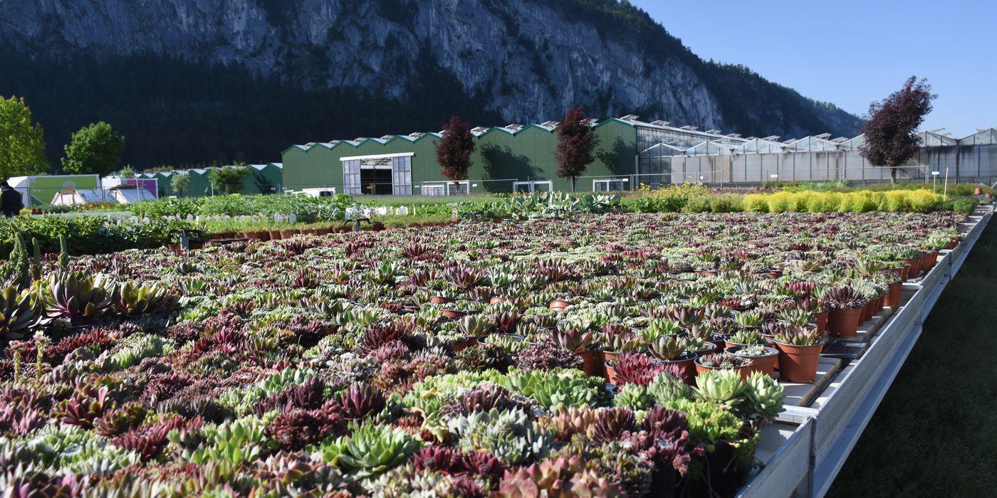 Produktion der Pflanzen im Freiland