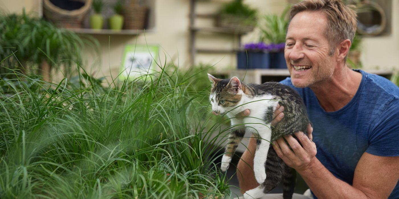 Haustier freundliche Pflanzen