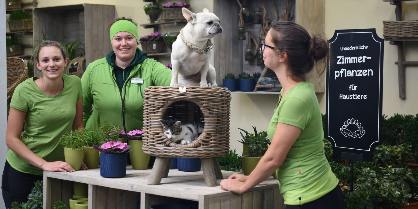 Unbedenkliche Zimmerpflanzen für Haustiere
