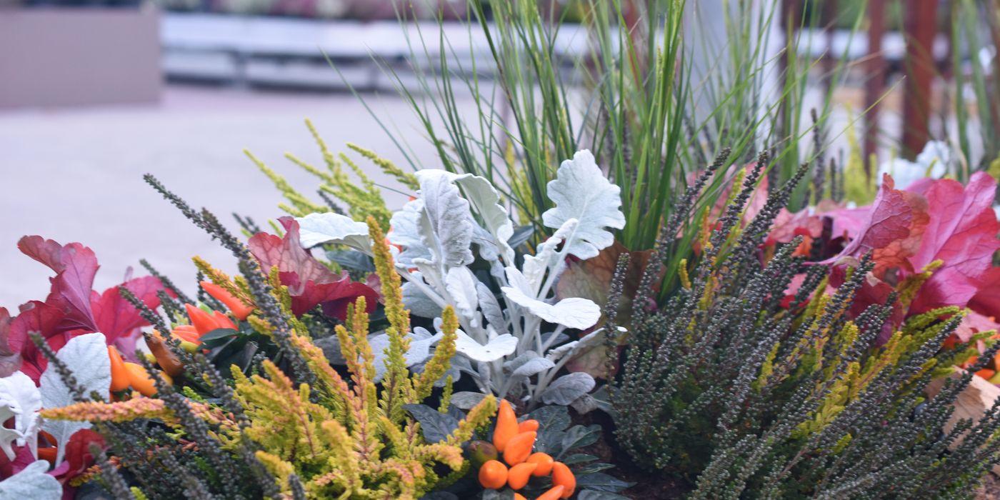 Grabbepflanzung: Ideen für den Herbst