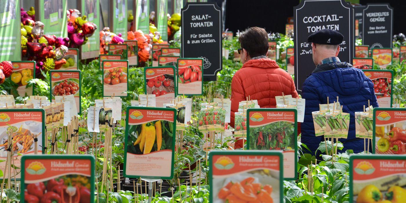 Tomaten in mehr als dreißig Sorten