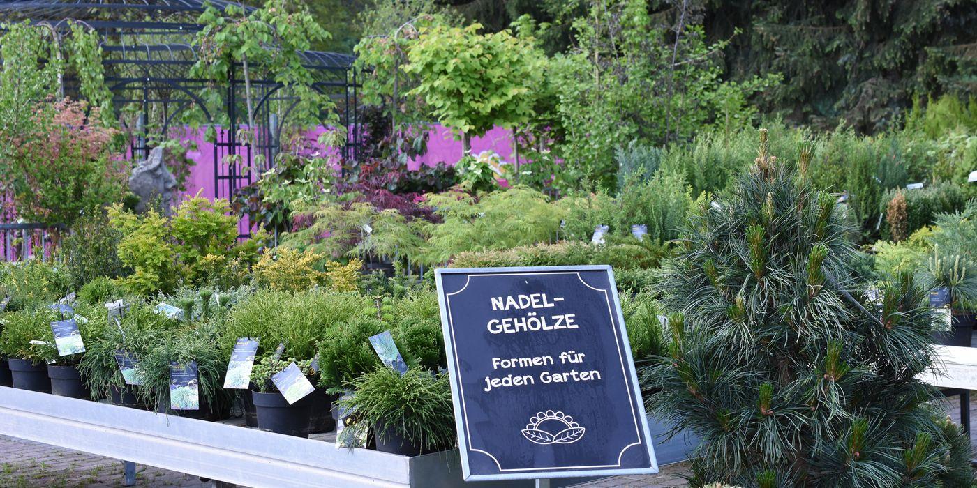 Nadelgehölz - Formen für jeden Garten
